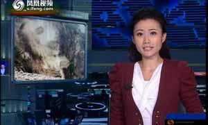广西苍梧稀土矿因非法盗采导致山体滑坡